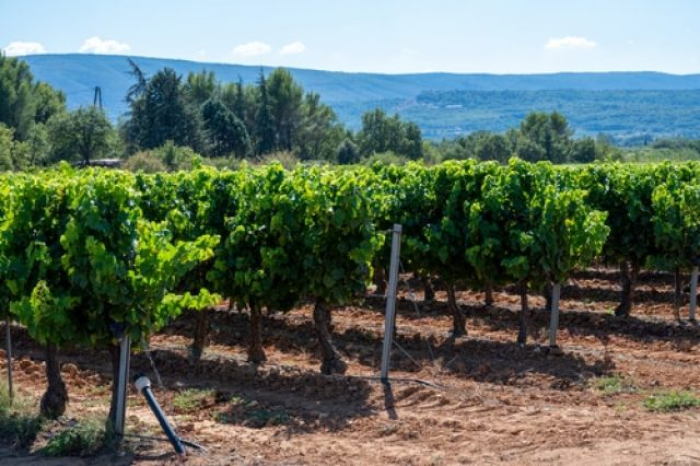 Visite vignoble du Luberon